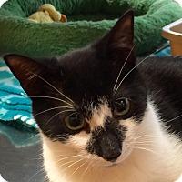 Adopt A Pet :: Jet - McDonough, GA