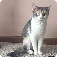 Adopt A Pet :: Mozzi - Columbus, OH