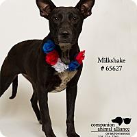Adopt A Pet :: Milkshake - Baton Rouge, LA