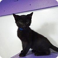 Adopt A Pet :: Huck - Belleville, MI