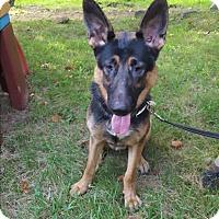 Adopt A Pet :: River - Louisville, KY