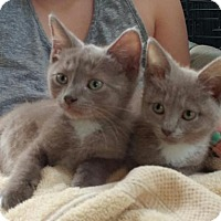 Adopt A Pet :: liza - Centreville, VA