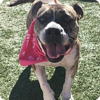 Adopt A Pet :: Enchilada - Greensboro, NC