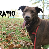 Adopt A Pet :: Horatio - Melbourne, KY