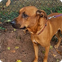 Adopt A Pet :: Forrest - Bloomfield, NJ