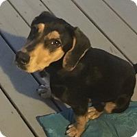 Adopt A Pet :: Sophie - Ellaville, GA