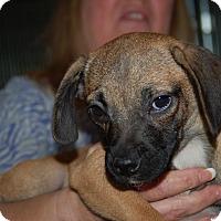Adopt A Pet :: Beatrice - Lebanon, TN