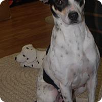 Adopt A Pet :: Isabelle - Manning, SC