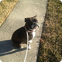 Adopt A Pet :: Rhetta - New Oxford, PA