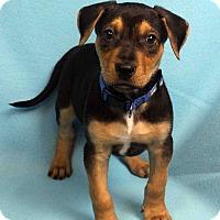 Adopt A Pet :: DENVER - Westminster, CO