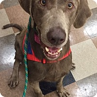 Adopt A Pet :: Miley - Baltimore, MD