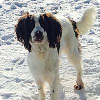 Adopt A Pet :: Briar - Green Bay, WI
