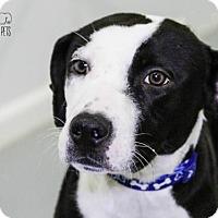 Adopt A Pet :: Jackson Fostered (Tammy) - Troy, IL