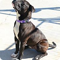 Adopt A Pet :: Toto - Gardnerville, NV