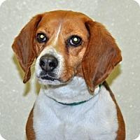 Adopt A Pet :: Cannoli - Port Washington, NY