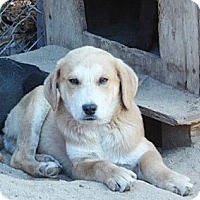 Adopt A Pet :: Jasper - Tunbridge, VT