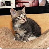 Adopt A Pet :: Storm - Farmingdale, NY