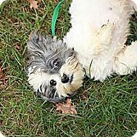 Adopt A Pet :: Abigail - Lancaster, OH