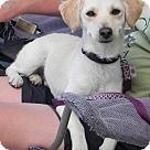 Adopt A Pet :: Grant