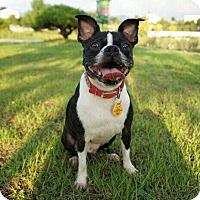 Adopt A Pet :: Robin - Buena Park, CA