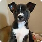 Adopt A Pet :: Pyxis