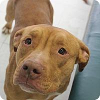 Adopt A Pet :: Ruga - Yukon, OK