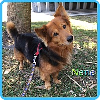 Adopt A Pet :: Nene - Hollywood, FL