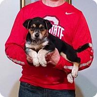Adopt A Pet :: Diego - South Euclid, OH