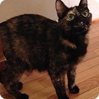 Adopt A Pet :: Jazmin - Wayne, NJ
