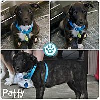 Adopt A Pet :: Patty - Kimberton, PA