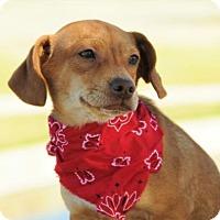 Adopt A Pet :: Riley - McKinney, TX