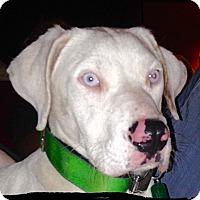 Adopt A Pet :: Zeus - Johnson City, TX