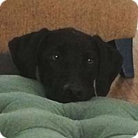 Adopt A Pet :: Kelly - Austin, TX
