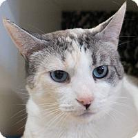 Adopt A Pet :: Anastasia - Redwood City, CA