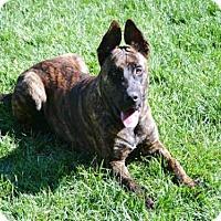 Adopt A Pet :: SIMBA - San Martin, CA