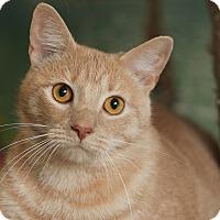 Adopt A Pet :: Simba - Coronado, CA