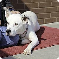 Adopt A Pet :: Lucas - Alpharetta, GA