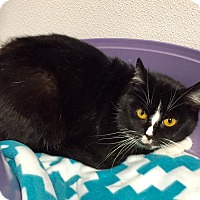 Adopt A Pet :: Sibyl - Greensburg, PA