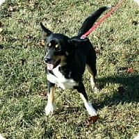 Adopt A Pet :: Jessie - Cameron, MO