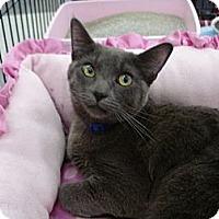 Adopt A Pet :: Olivia - Monrovia, CA