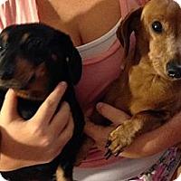 Adopt A Pet :: MAX & HUNNIE - Portland, OR