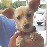 Adopt A Pet :: Cagney - Long Beach, CA