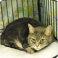 Adopt A Pet :: Squish - Mission, BC