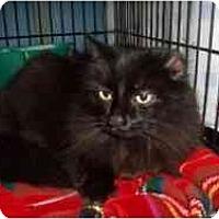 Adopt A Pet :: Kelly - Hamburg, NY