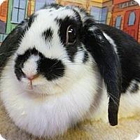 Adopt A Pet :: Kerri - Foster, RI