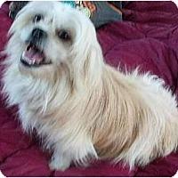 Adopt A Pet :: Sydney - Mooy, AL