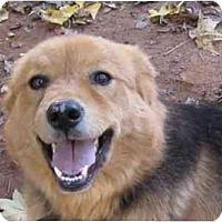 Adopt A Pet :: Blossum - Conyers, GA