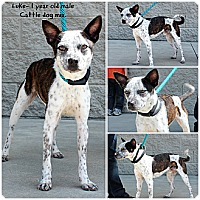 Adopt A Pet :: Luke - Evansville, IN