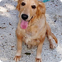 Adopt A Pet :: Molly - Murdock, FL
