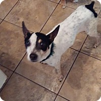 Adopt A Pet :: Lizette - Brooksville, FL